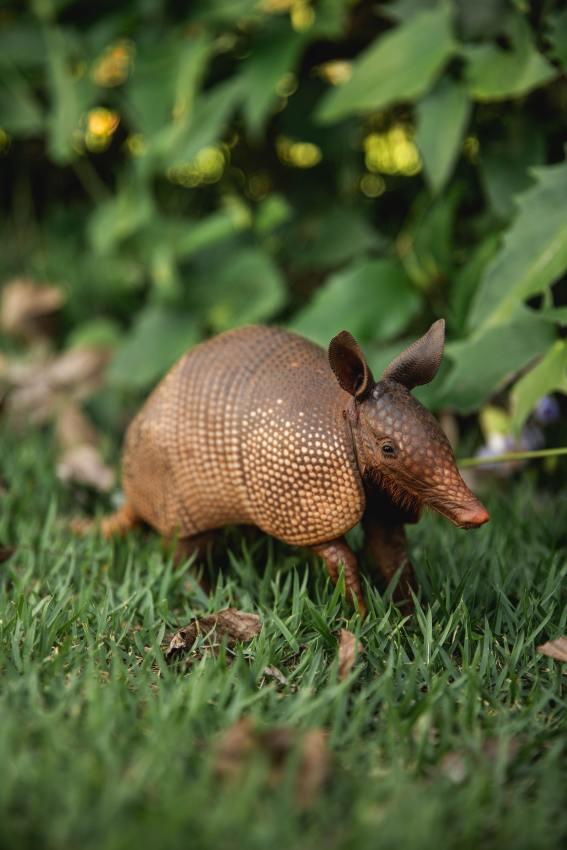 brown-animal-on-green-grass-3683015