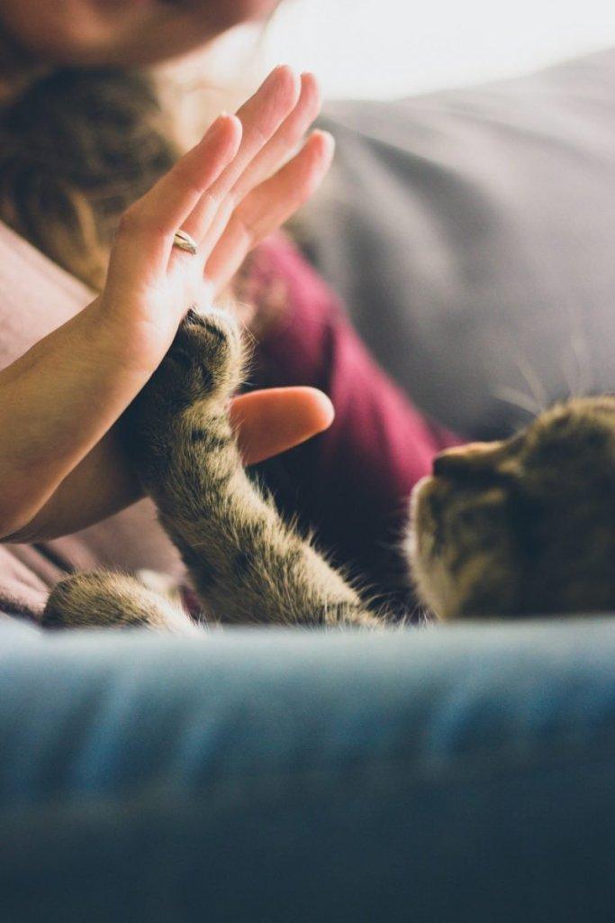 Cat vets in Cork