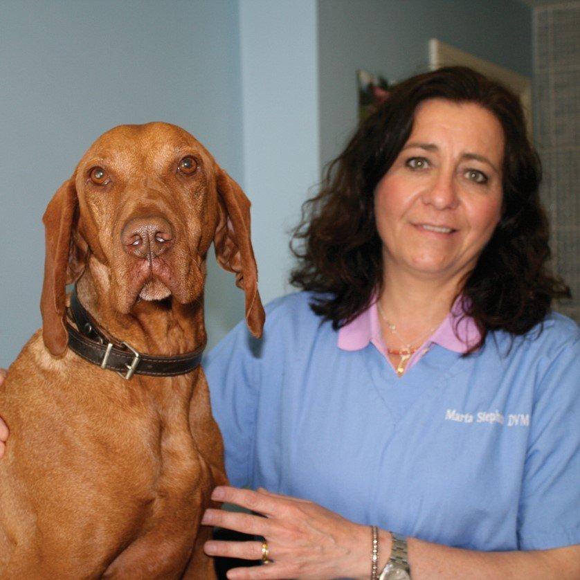 Veterinary Surgeon Marta Stephan