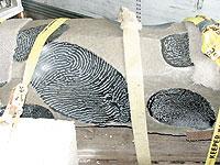 MiddlebrookFingerprints.jpg