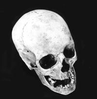nickbastman_skull_web.jpg