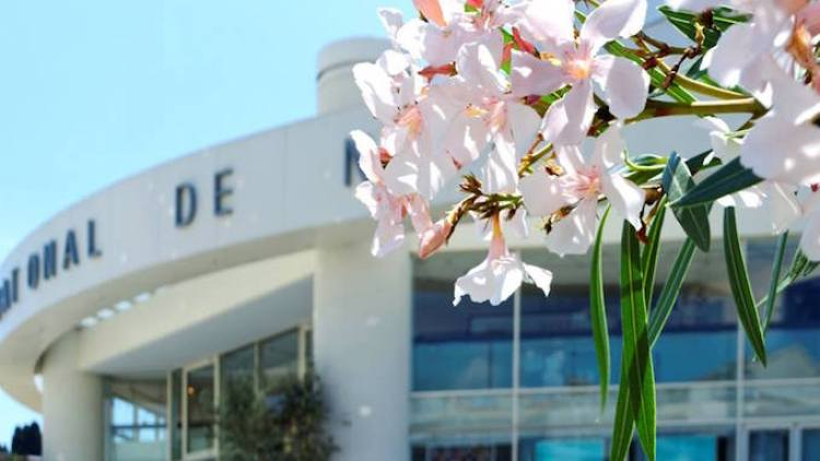 TNN facade