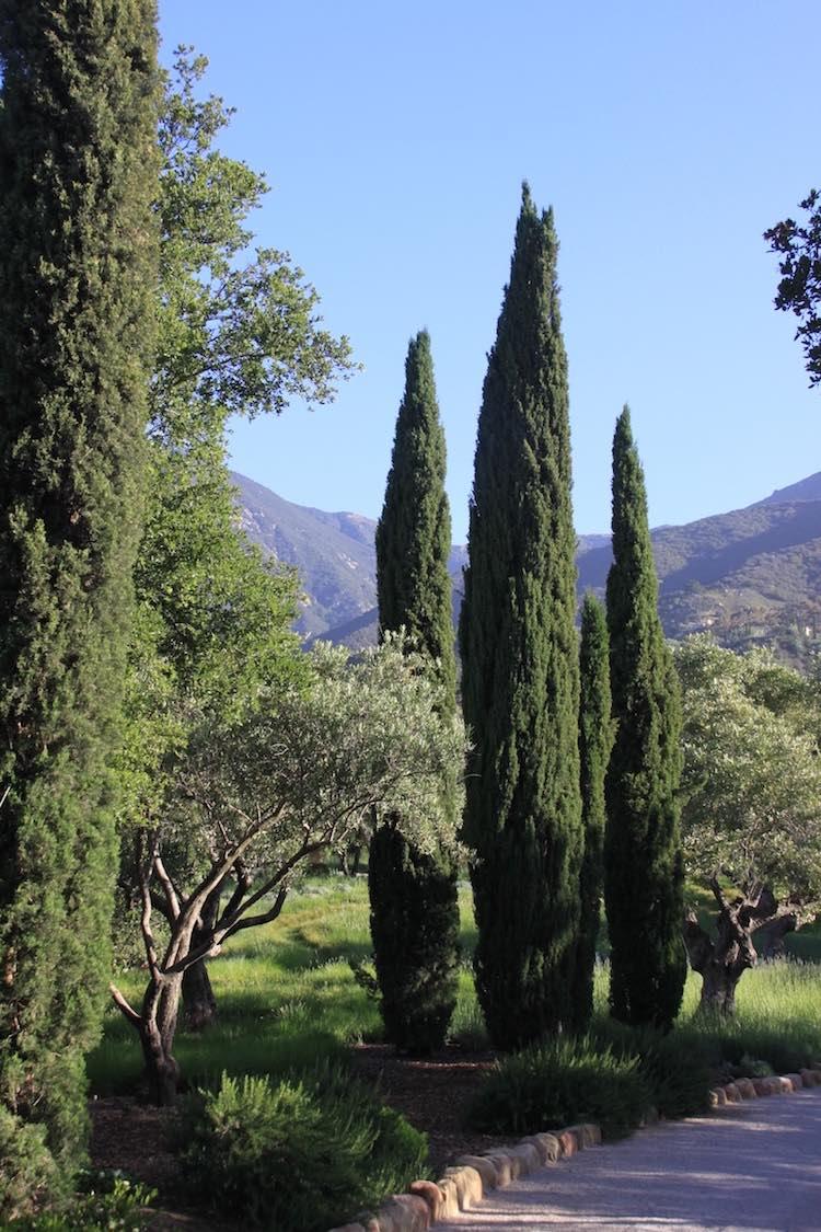 Jean Mus garden Montecito