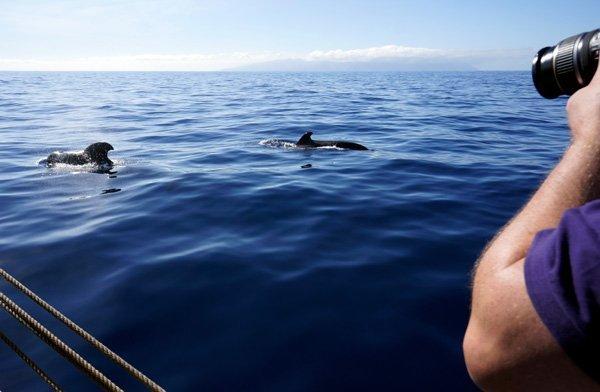 Whale watching: alla scoperta dei cetacei fotografo alle prese con delle balene