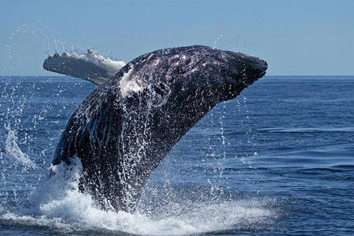 Gita in battello e Whale Watching