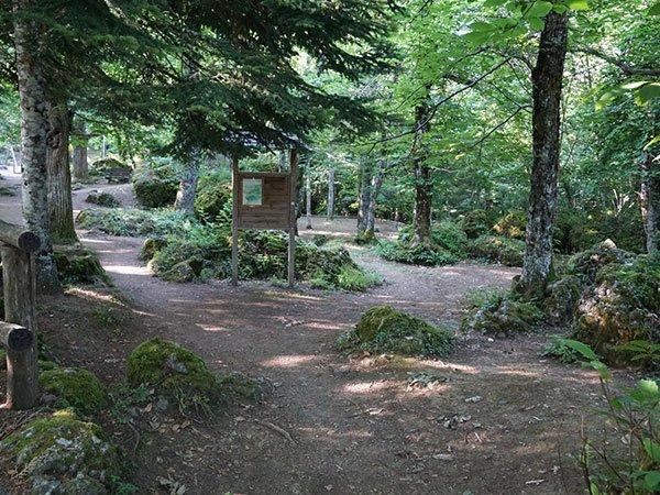 Val Trebbia passeggiata nel bosco