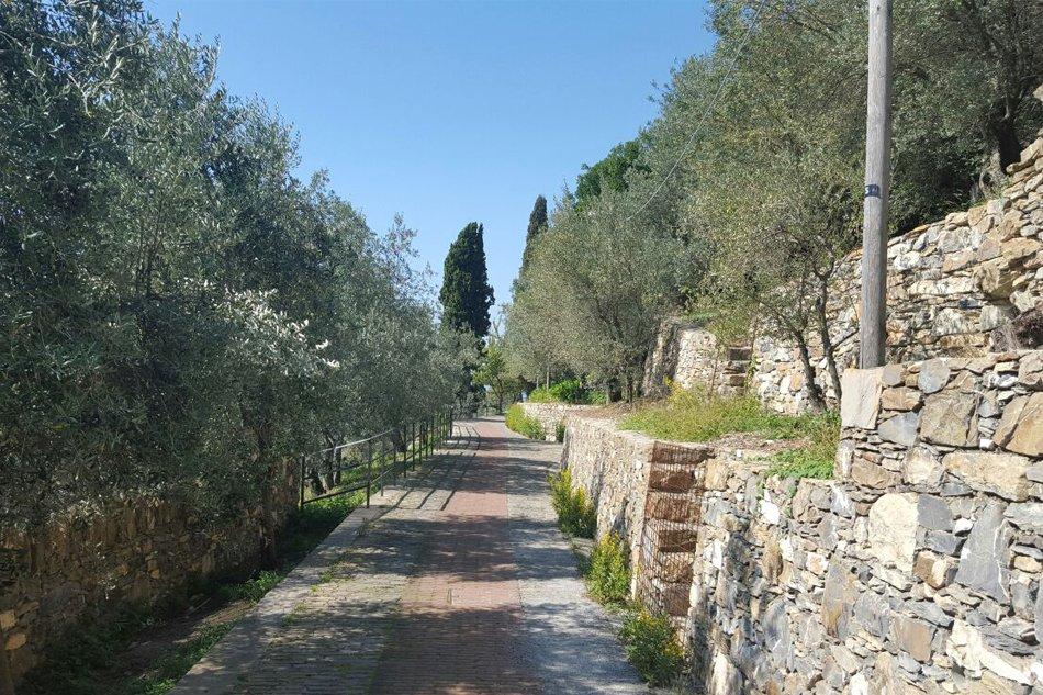 Sant'Ilario antica creuza tra gli ulivi