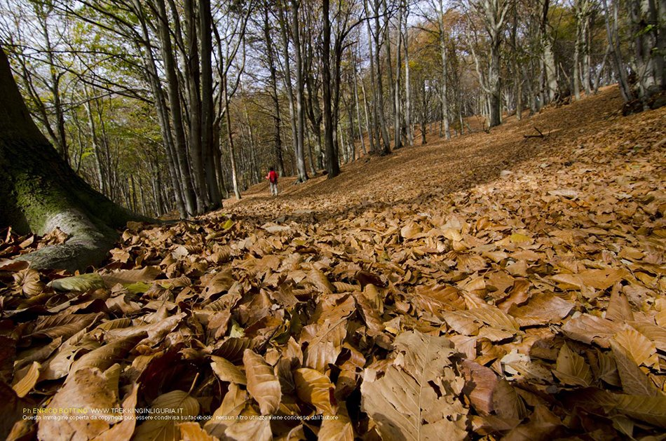 Riserva Naturale dell Adelasia in autunno