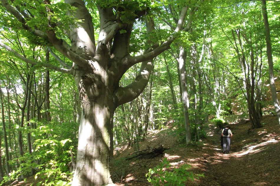 Riserva Naturale dell Adelasia biodiversità nei suoi magnifici boschi
