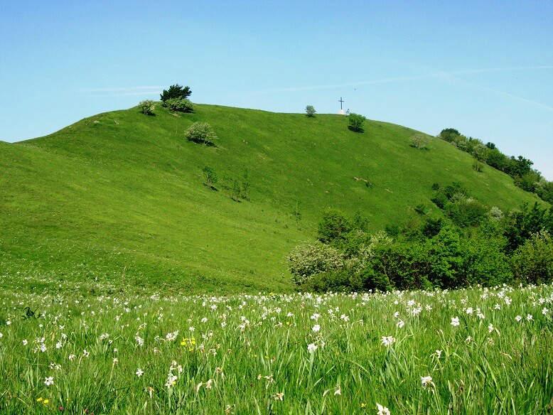 Parco dell'Antola collina verde e prato in fiore