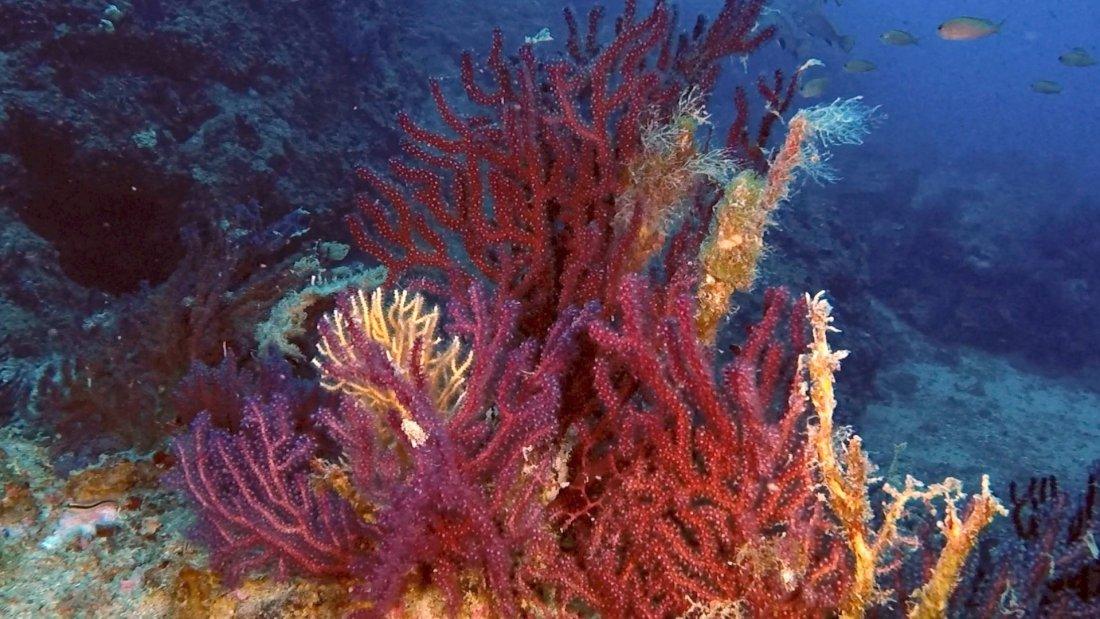 San Fruttuoso di Camogli fondale marino