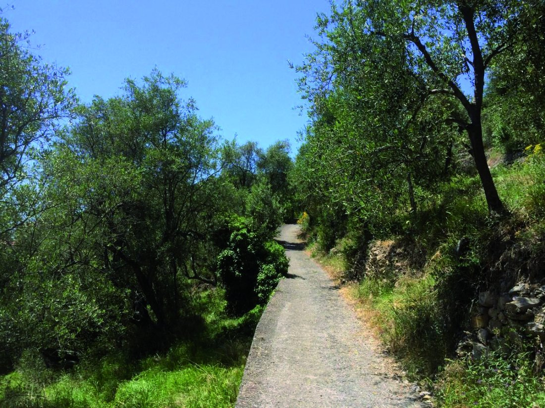 Parco del Ciapà sentiero tra la natura