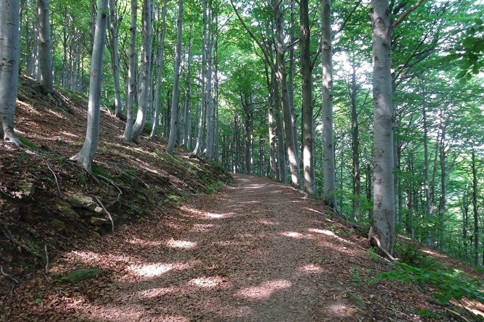 Colle del Melogno passeggiata nei boschi