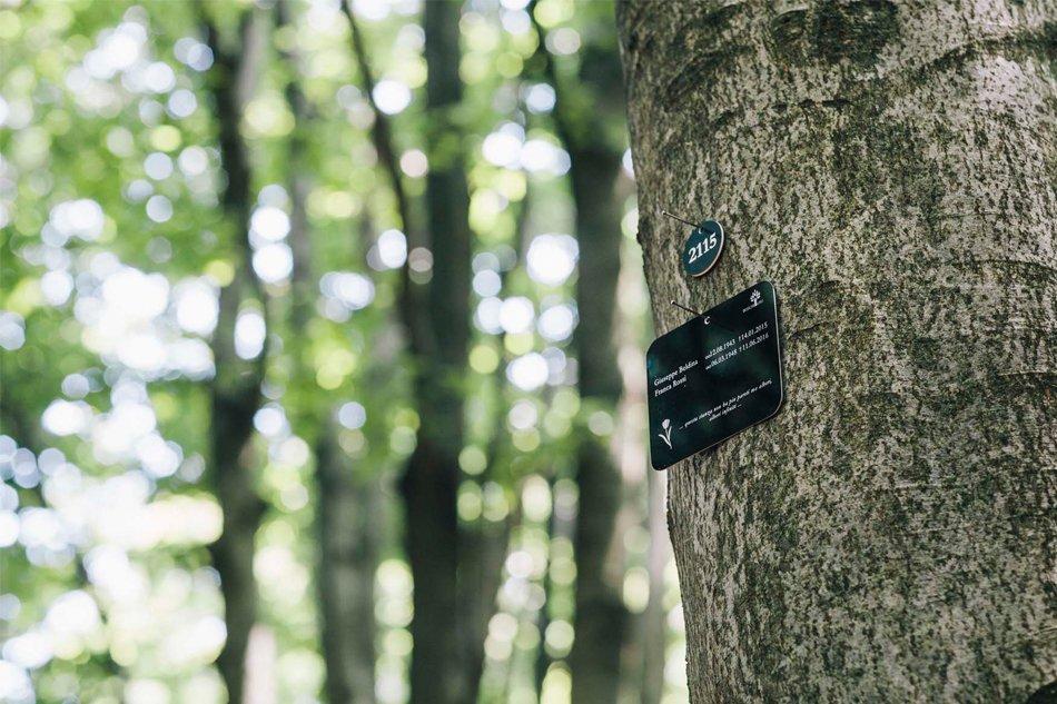 Sassello Foresta della Deiva particolare del cartello