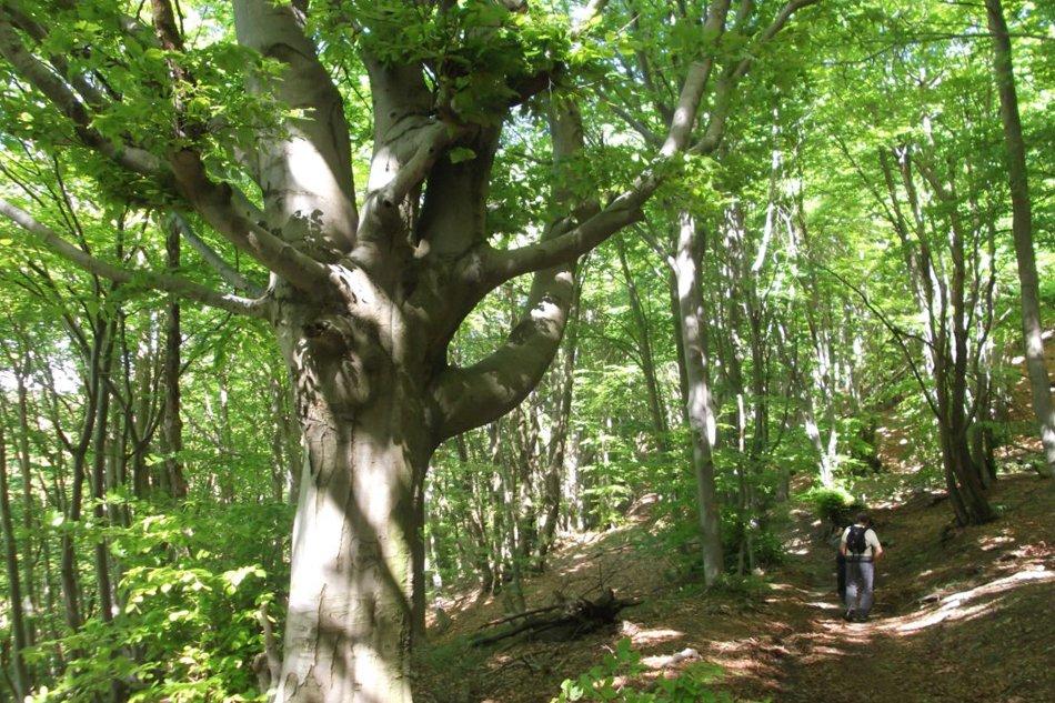 Riserva naturale dell'adelasia passeggiata nei boschi