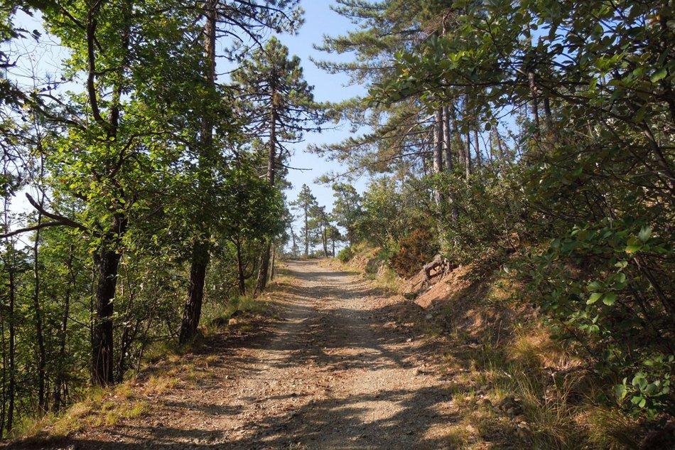 Sassello Foresta della Deiva particolare del sentiero