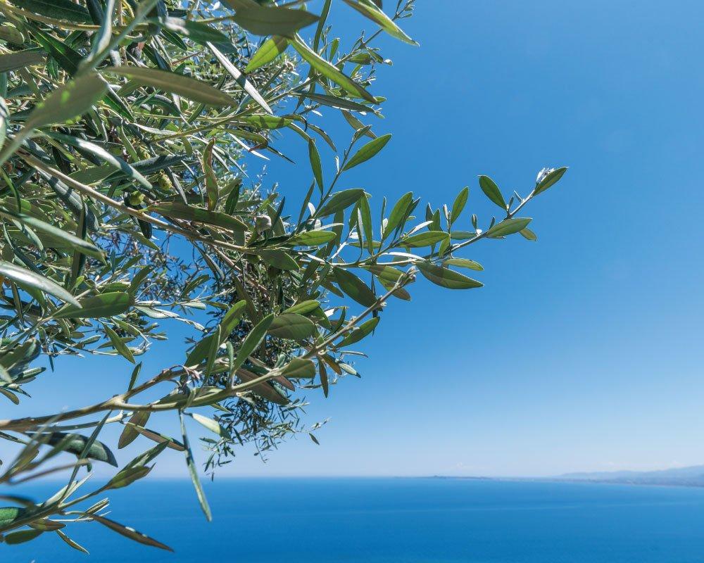 Chi-siamo Liguria panorama sul mare Riviera dei Bambini
