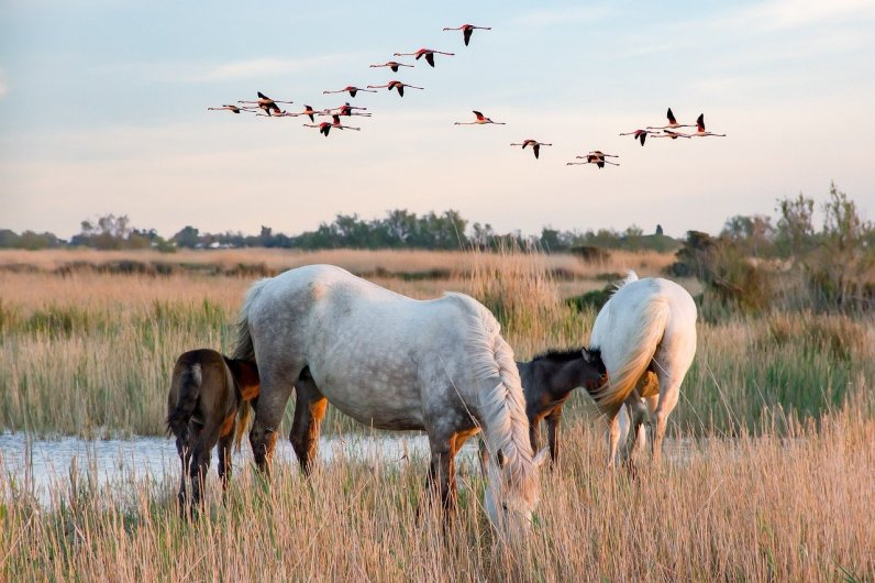 scene-of-the-camargue-6-2493873_1280