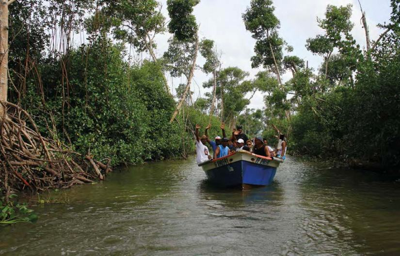 mangrove de rivière-salée