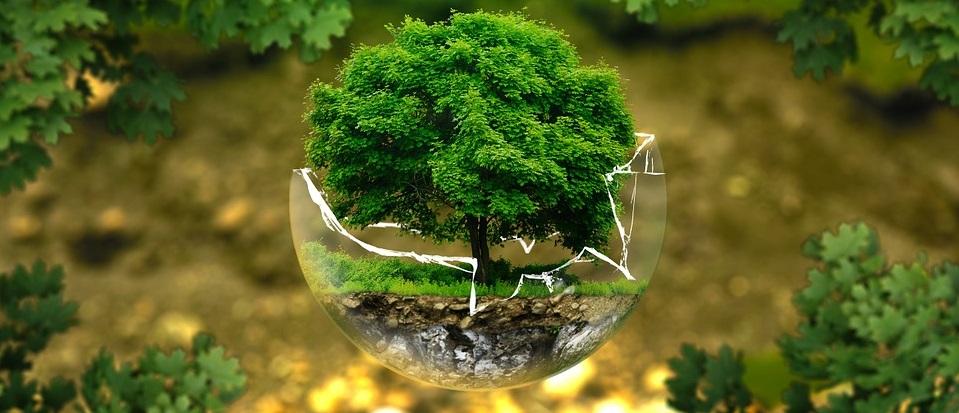 Una visione ecologica comune per scuole, università e lavoro. E una rivoluzione per tutta la società!