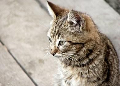 Seekor Kucing di Depan Restoran A&W #2