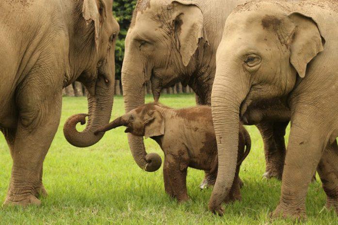 Elephant baby park