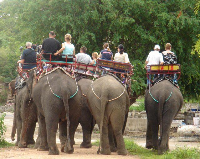 Elephant trek thailande
