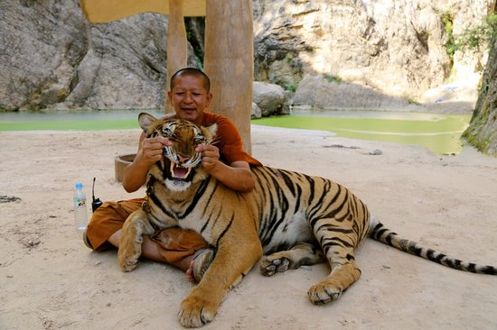 Maltaitrance tigre thailande