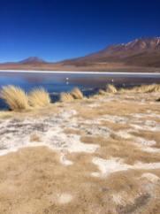 Laguna charcota sud lipez trek