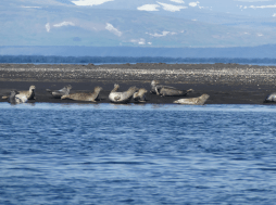 illugastadir-seal-watching-iceland