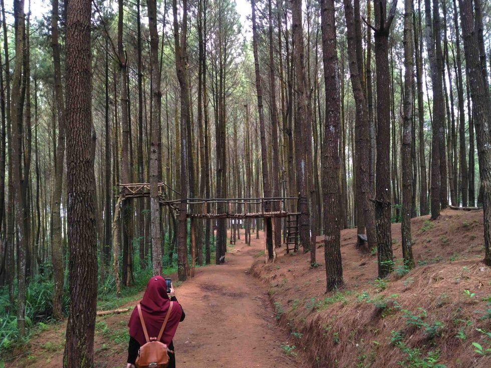 Hutan Pinus Asri Mangunan, Bantul