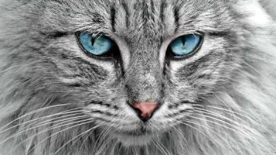 صورة معلومات تفيدك عن القطط