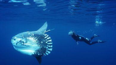 Photo of أنواع الأسماك