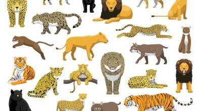 صورة معلومات عن حيوانات مفترسة