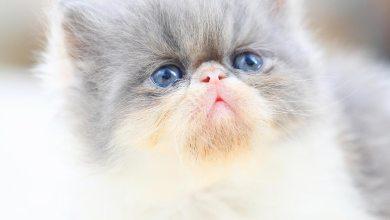 صورة معلومات مفصلة عن عالم القطط الجميل
