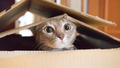 صورة كيفية اقناع الوالدين بشراء القطط