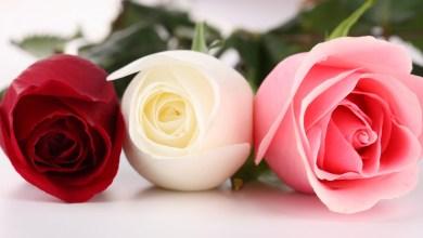Photo of صور أزهار طبيعية تدخل السرور للقلب