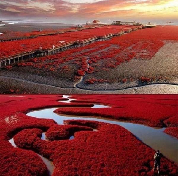 ريد بيتش ، الصين