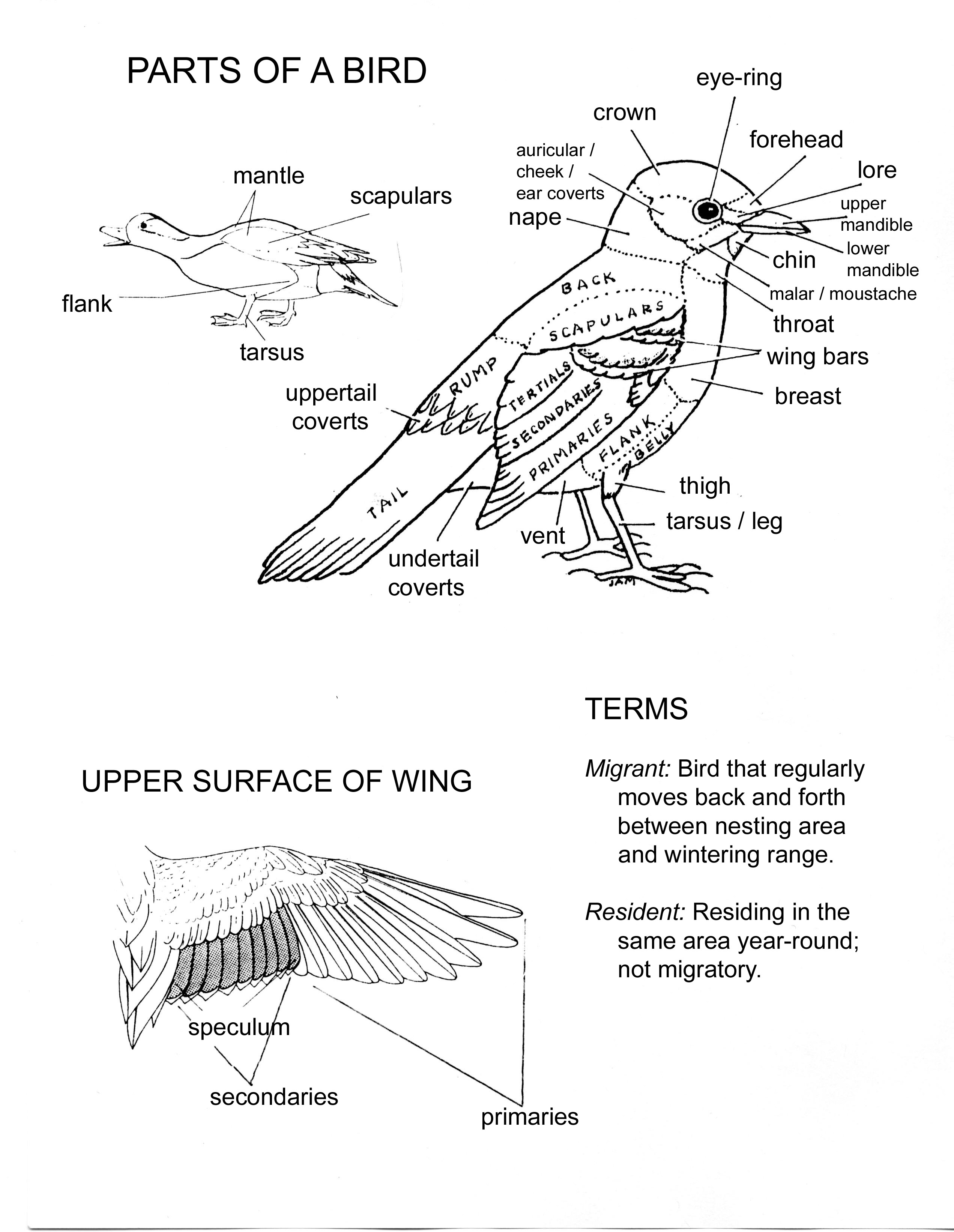 Worksheet For The Area Of Science About Birds Parts Of The Body Images