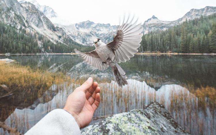 Национальный парк Северная Каскада, Вашингтон