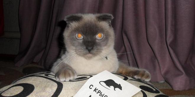 Партия кота Барсика