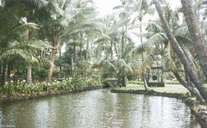 coco-palms-5