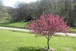 Country Spring 008