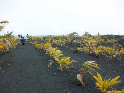 Hawaii Vacation - Black Sand Plants