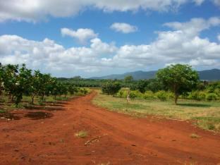 Hawaii Vacation - Dole Plantation 2