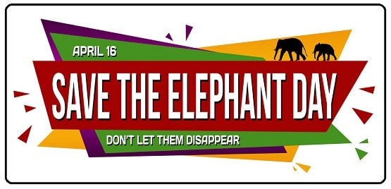 Save the Elephant Day Top Best Photo images HD Pics