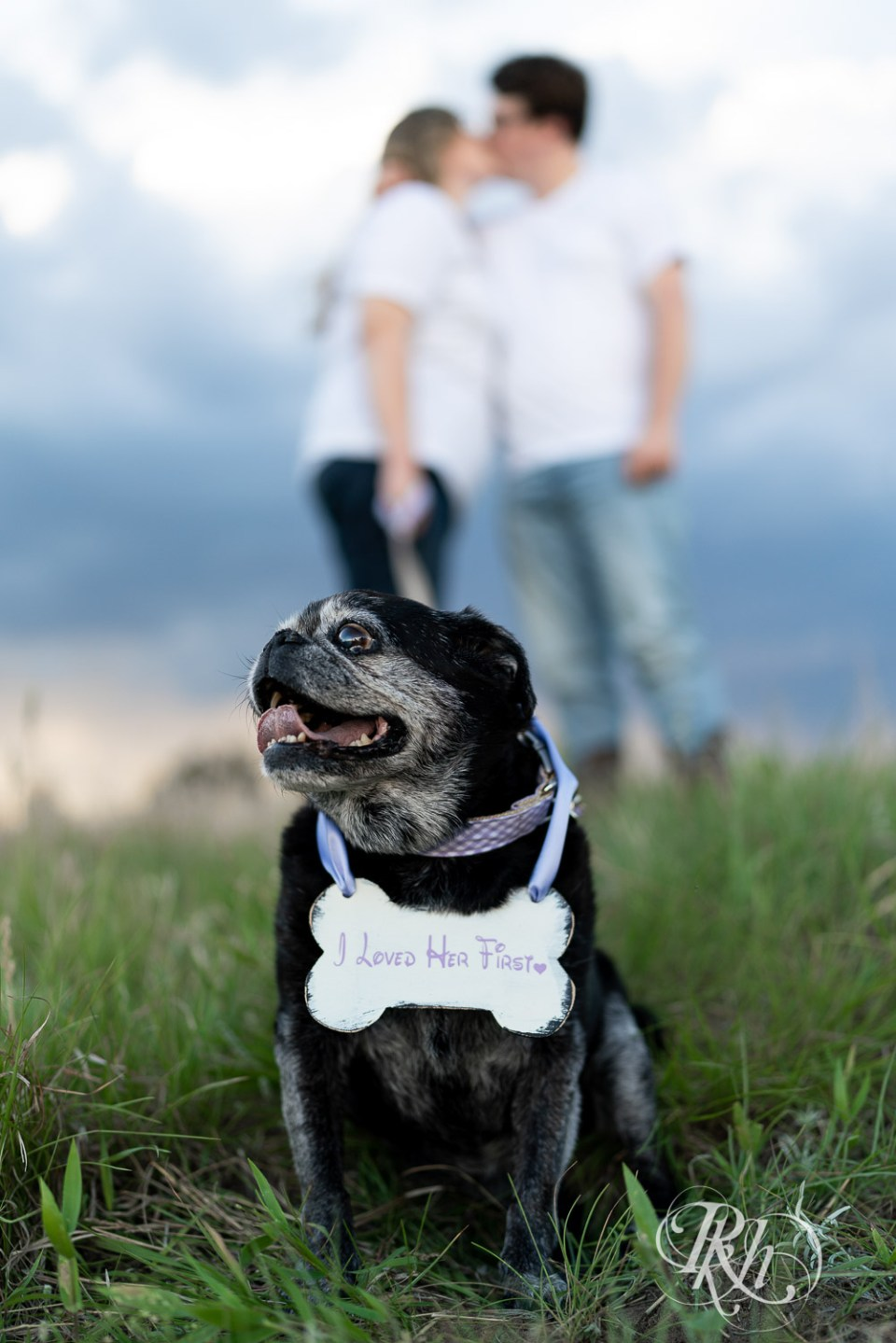 engagement photography with pugs