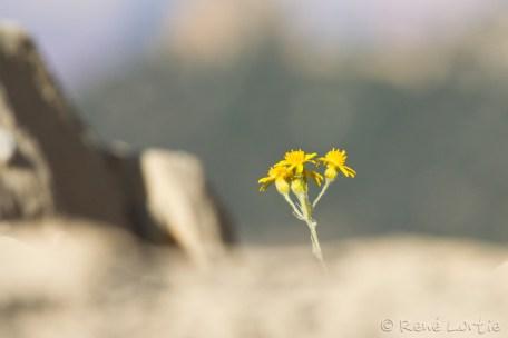 Fleur seule devant l'immensité