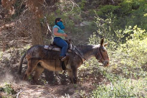 On peut faire la North Kaibab trail à dos de mulet
