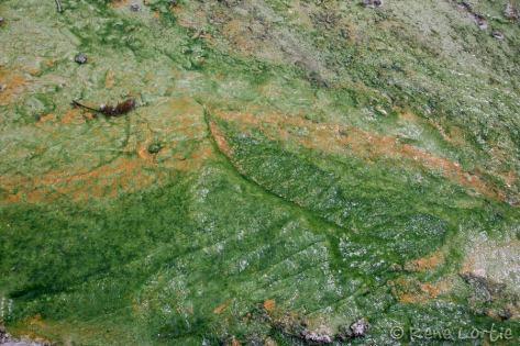 Couleurs produites par les micro-organismes